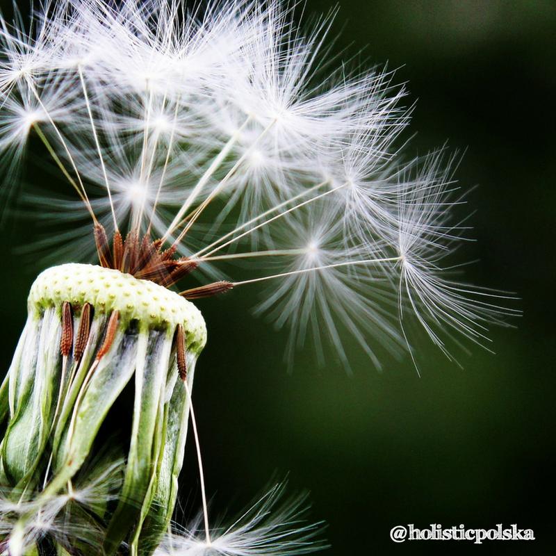 W jaki sposób łagodzić objawy wiosennych alergii?