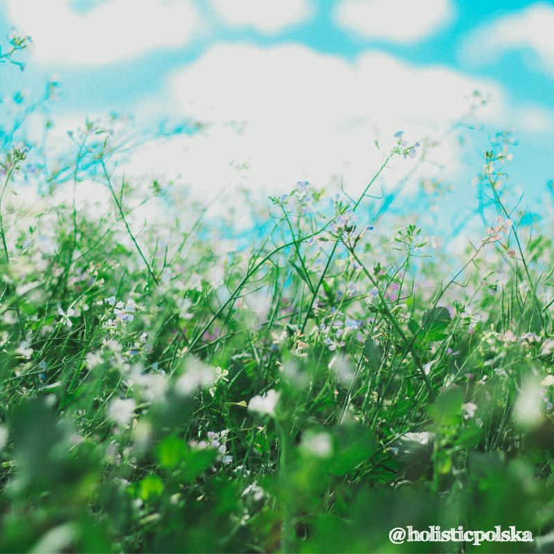 Alergie, jak zminimalizować ich objawy i wzmocnić odporność. Teresa Jaroszyńska, ekspert ds. produktów Holistic Polska