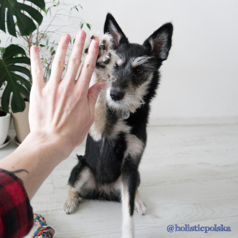 Kontakt ze zwierzętami pomaga złagodzić stres